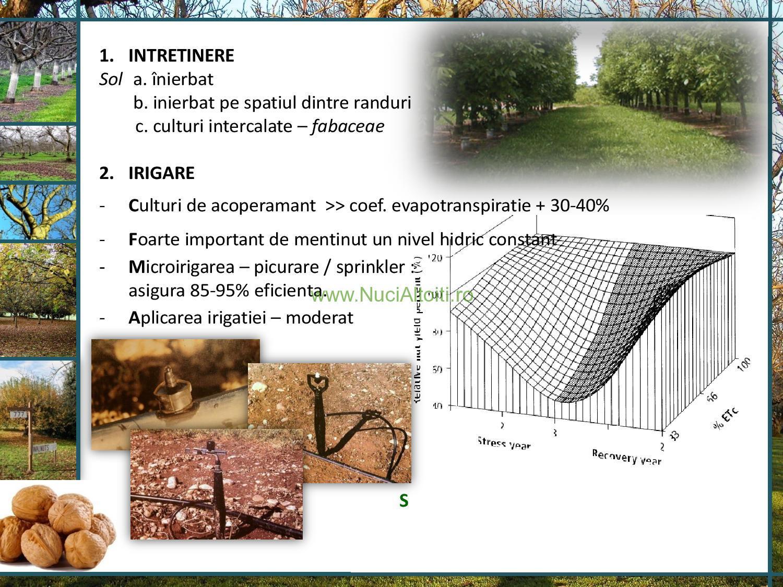 PREZENTARE SUSȚINUTĂ ÎN 2008 LA UNIVERSITATEA AGRARĂ DE STAT DIN MOLDOVA FACULTATEA DE HORTICULTURĂ