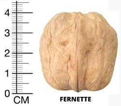 fernette