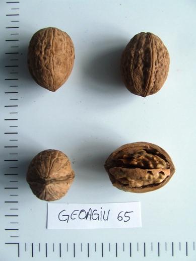 geoagiu65