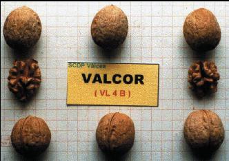 nuc2_valcor